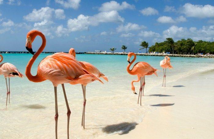 Viaggio di nozze ad Aruba