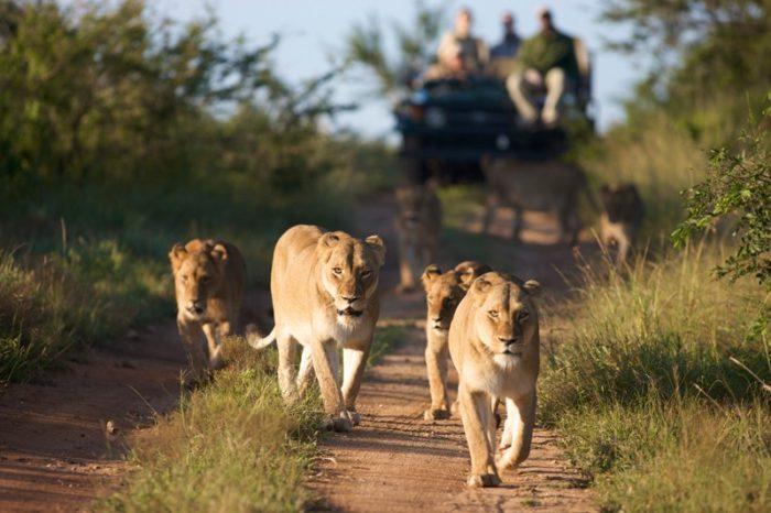 Tour di gruppo Esperienza Sudafricana